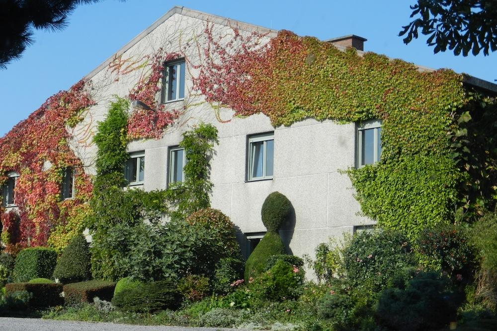 vine-building